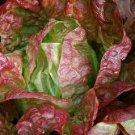 Paris Bistro Lettuce Mix Seeds
