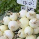 Sweet White Spanish Onion Seeds