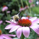 Hummingbird & Butterfly Cutting Garden Mix Seeds