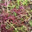 Mizuna Red Streaked Seeds