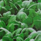 Crescent Spinach Seeds