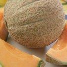 Hearts of Gold Melon / Cantaloupe Seeds
