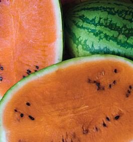 Orange Tendersweet Watermelon Seeds
