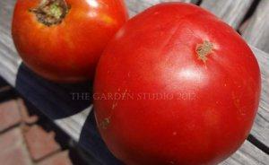 Cosmonaut Volkov Tomato Seeds