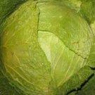 Des Vertus Savoy Cabbage Seed