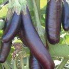 Little Fingers Eggplant Seeds