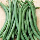 Beans, Fresh Pick Bush Bean