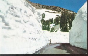 In Lassen Volcanic National Park California Post Card