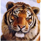 Handicrafts Art Repro oil painting:tigers In canvas 24x24""