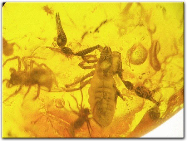 2x pseudoscorpion & 2 x spider fossils in Baltic amber