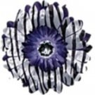 Purple Zebra  daisy hairclip