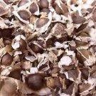 Moringa  oleifera Seeds ( 55 Seed pack)