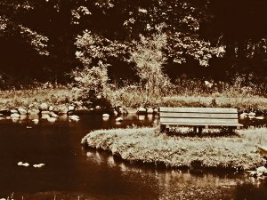 Lonely Bench 16x20 Gallery Wrapped Canvas