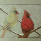 "Cardinals Colored Pencils 7 1/2""X10"""