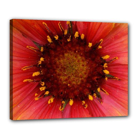16x20 Gallery Wrap Red Flower