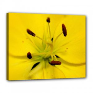 16x20 Gallery Wrap Yellow Lilly