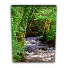 Up the River - 12x16 canvas print