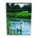 Swan Canvas 12x16