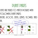 Identifying Plant and Tree Parts with Friendly Matching Science Sheet (PDF)