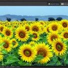 Digital Picture Sunflower