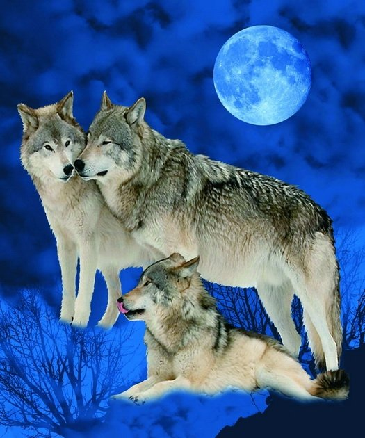 Wolves And Full Moon, mink style soft and warm queen size blanket,  Q958E