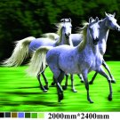 White Running Horses, mink style soft and warm queen size blanket, Q955E