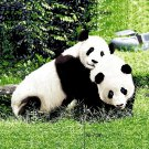 Pandas, Mink Style Queen Size Soft & Warm Blanket_Q984E