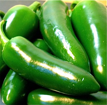 30 Jalapeno Chili Pepper Large Seeds
