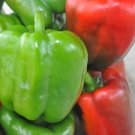 250 Bulk California Wonder Green Red Bell Pepper Seeds