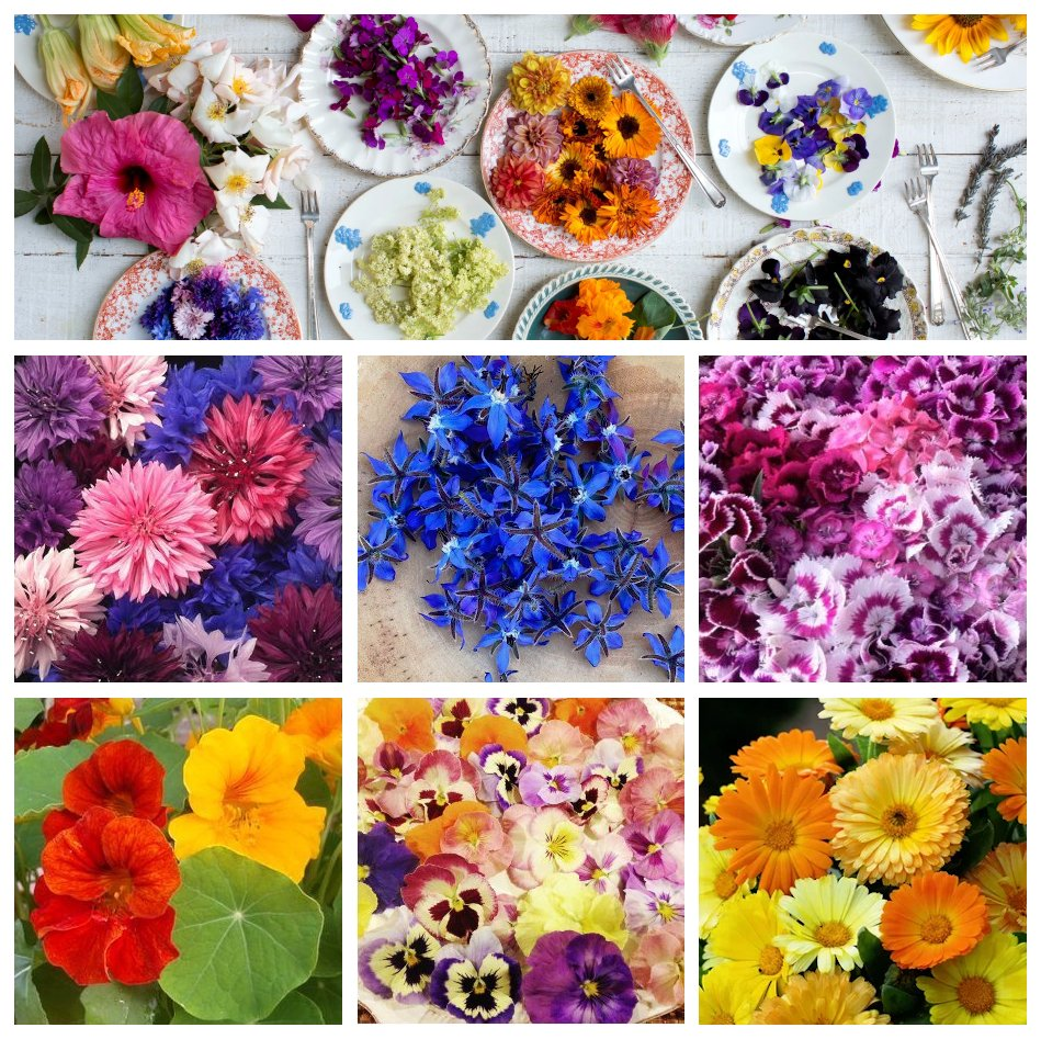 Edible Flowers Garden Seed Collection
