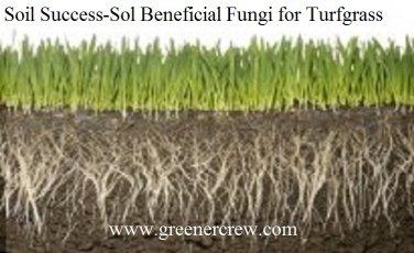 Turfgrass Beneficial Fungi