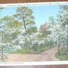 Vintage Dogwood in Bloom Blue Ridge Parkway Virginia Postcard
