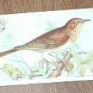 Arm & Hammer Useful Birds of America Veery 3rd Series Trading Card