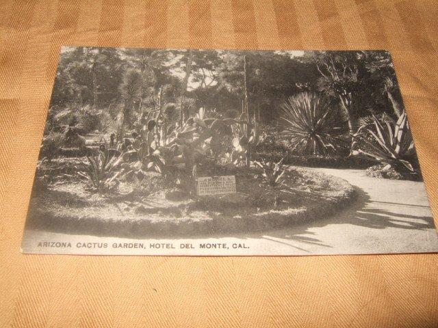 Arizona Cactus Garden, Del Monte, Ca. Black And White Postcard 1910's