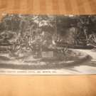 Arizona Cactus Garden, Del Monte, Ca. Black And White Postcard 1910's