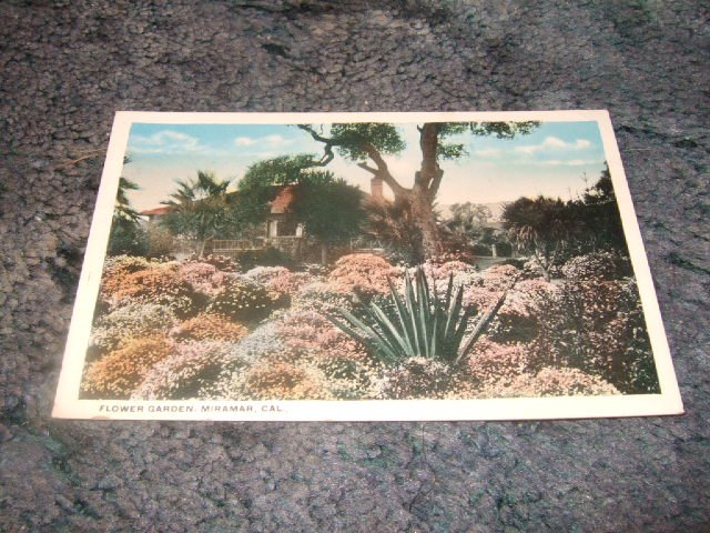 Flower Garden, Miramar California 1910's Postcard