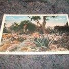Flower Garden, Miramar California 1910's Postcard