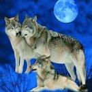 Wolves under Moon, Q958