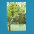 ELEPHANTS KALININGRAD ZOO ZOOPARK KONIGSBERG CALENDAR CARD 1989