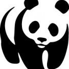 Panda Bear Vinyl Decal