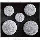 Antique Irish Crochet Buttons 1912 PDF Pattern