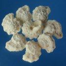 B508 Craftshells - Liotina depressa shells 1 lot = 1 oz