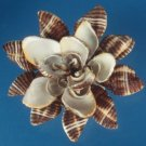 B595 Cut shells- Pollia fumosa-03, 1 oz.