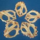 B562 Cut shells- Thais alouina-02,  1 oz.