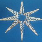 B627 Sailors Valentine Cut shells Turritella terebra-04, 1 oz