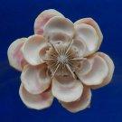 B560 cut shells Sailors Valentine Craft shells- Drupa morum-05, 1 oz.