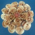 B528 Sailors Valentine Craft Cut shells - Vexillum plicarium-05, 1 oz