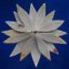 B533 Cut shells- Annachlamys macassarensis-05, 1 oz