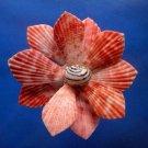 B693 Cut shells- Mimachlamys sanguinea-55, 12 pcs.