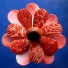 B693 Cut shells- Mimachlamys sanguinea-52, 12 pcs.